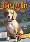 - Beagle
